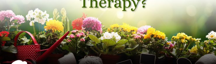 What is Horticulture Therapy?